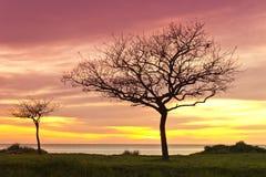 Bomen bij zonsopgang stock afbeeldingen