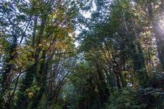 Bomen bij Zoutwater royalty-vrije stock foto's