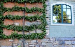 Bomen, bladeren, en een bakstenen muur Stock Foto