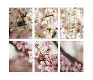 Bomen in bloei Stock Foto's