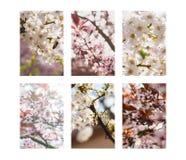 Bomen in bloei Royalty-vrije Stock Afbeeldingen