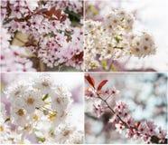 Bomen in bloei Stock Afbeelding