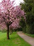 Bomen in bloem Royalty-vrije Stock Afbeeldingen