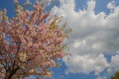 Bomen in bloemen Stock Afbeeldingen