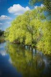 Bomen in bloesems Stock Fotografie