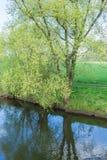 Bomen in bloesems Royalty-vrije Stock Fotografie