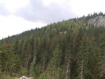 Bomen, bomen en bomen stock afbeelding