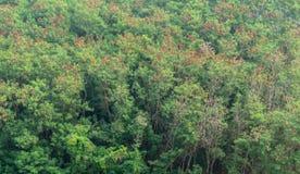 Bomen in bos Royalty-vrije Stock Foto's
