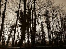 Bomen, bos royalty-vrije stock foto