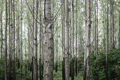 Bomen in bos Royalty-vrije Stock Fotografie