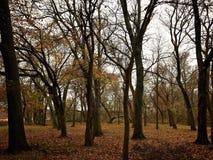 Bomen in bos Stock Afbeelding