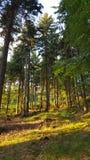 Bomen in bos Royalty-vrije Stock Foto