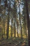 Bomen in bos Stock Foto's