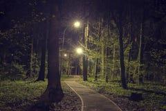 Bomen in bospark met lichten bij donkere nacht Landschap van het groene park van de nachtlente in stad Weg in groen bos Stock Foto
