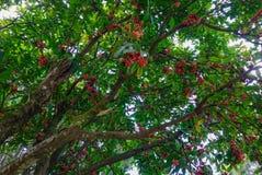 Bomen in botanische tuin royalty-vrije stock afbeelding
