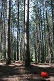 Bomen boven ons Stock Afbeelding