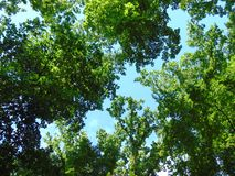 Bomen boven u royalty-vrije stock fotografie