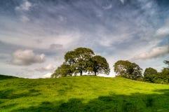 Bomen bovenop heuvel stock foto's