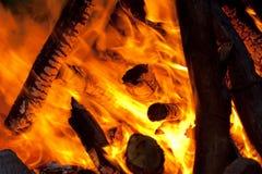 Bomen in brand Stock Afbeelding