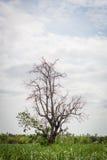 Bomen in brede weiden Royalty-vrije Stock Afbeelding