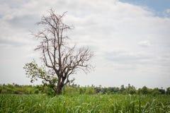 Bomen in brede weiden Royalty-vrije Stock Afbeeldingen