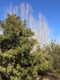 Bomen in Chaoyang Parkp Royalty-vrije Stock Afbeeldingen