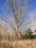 Bomen in Chaoyang Parkp Royalty-vrije Stock Foto