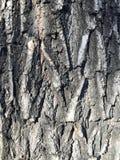 Bomen in Chaoyang Parkp Stock Foto