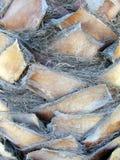 Bomen - close-up van palmboomstam Stock Afbeeldingen