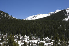Bomen in Colorado Royalty-vrije Stock Afbeeldingen