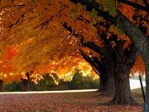 Bomen in Daling Stock Afbeelding