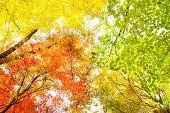 Bomen in dalingskleuren Stock Afbeeldingen