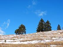 Bomen in de alpiene wereld royalty-vrije stock fotografie