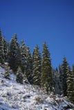 Bomen in de bergen stock afbeeldingen