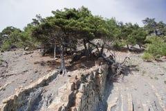 Bomen in de bergen Stock Foto's