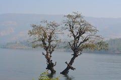 Bomen in de binnenwateren van de koynadam royalty-vrije stock foto's