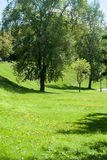 Bomen in de dag van de parkzomer Stock Afbeeldingen