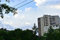 Bomen in de groene stad in de zomer royalty-vrije stock foto's