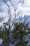 Bomen in de hemel in Sicilië Royalty-vrije Stock Fotografie