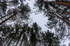 Bomen in de hemel stock fotografie