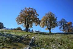Bomen in de herfst Stock Foto