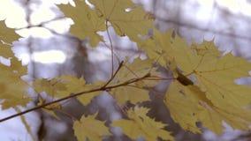 Bomen in de herfst stock videobeelden