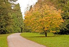 Bomen in de Herfst Royalty-vrije Stock Foto's