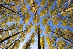 Bomen in de herfst Royalty-vrije Stock Afbeeldingen