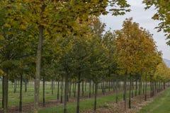 Bomen in de herfst Stock Fotografie
