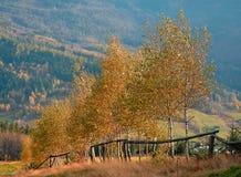 Bomen in de herfst Stock Afbeeldingen
