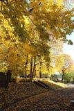 Bomen in de herfst Stock Afbeelding