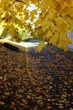 Bomen in de herfst Stock Foto's