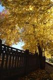 Bomen in de herfst Royalty-vrije Stock Afbeelding