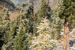 Bomen in de herfst in de alpen Royalty-vrije Stock Foto's